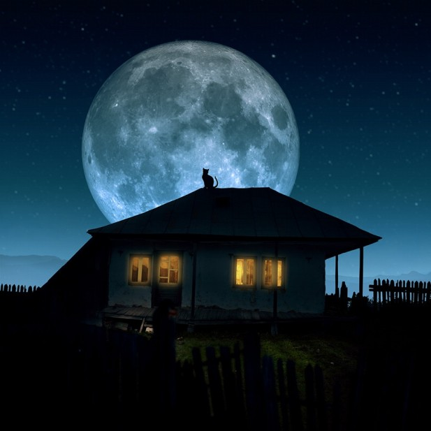 """ Cat... Moon """